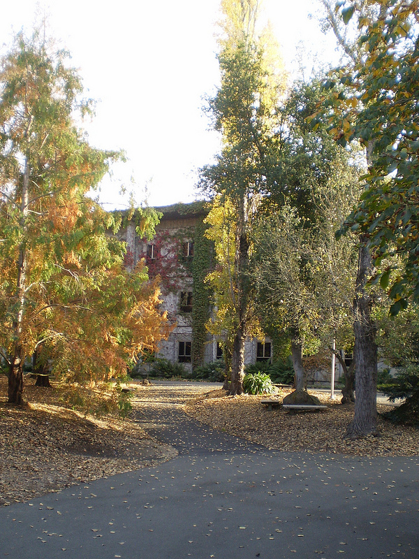 SSU in Fall